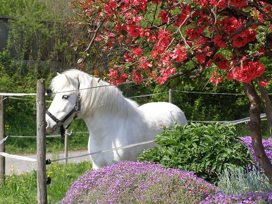 Gift fürs Pferd – Tierärztin erklärt die wichtigsten Giftquellen und wo sie zu finden sind