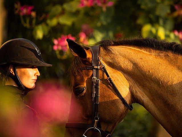 Lauschangriff beim Pferd: Tierärztin erklärt die Ohren des Pferdes