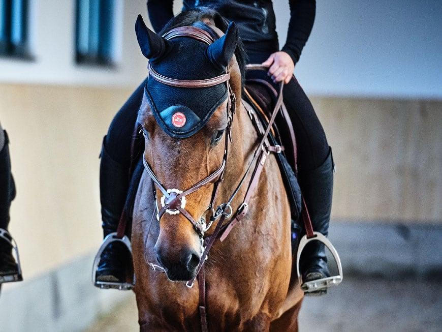 Tierärztin erklärt: So erkennst Du typische Augenerkrankungen beim Pferd
