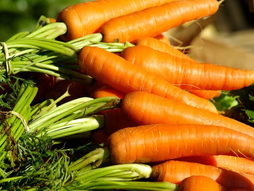 Forschung bei Pferden bestätigt: Karotten halten den Pferdemagen gesund
