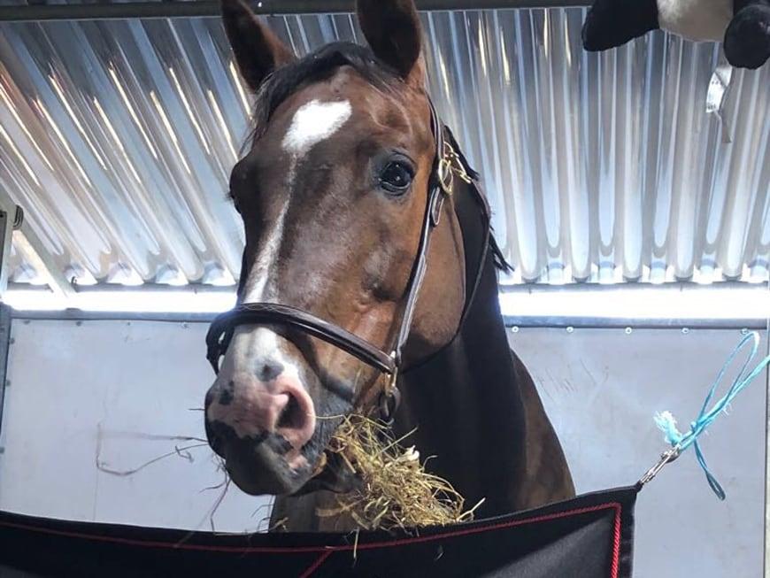 Tierärztin warnt: Pferde-Vergiftung bei Boxenfrust?