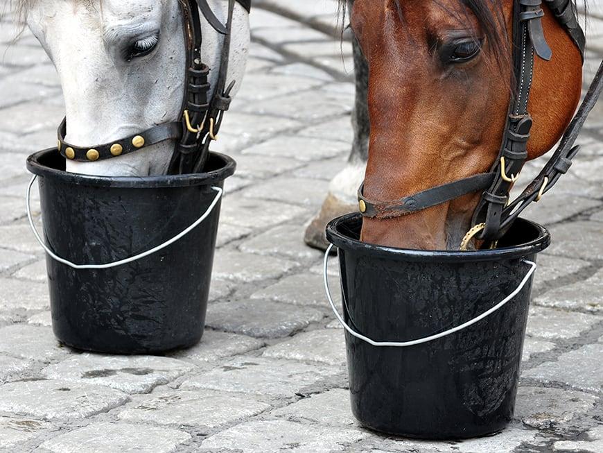 A veterinarian explains – The life-threatening heat stroke in horses!