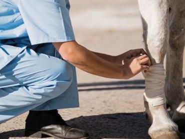 Tierärztin erklärt: Stallapotheke fürs Pferd leicht gemacht!