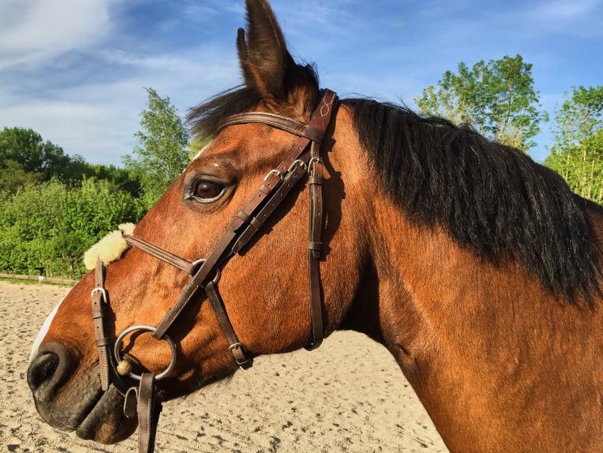 Tierärztin erklärt: Was tun, wenn Dein Pferd Zahnprobleme hat!