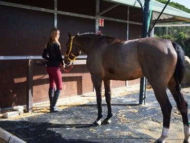 Tierärztin erklärt: So entwurmst Du Dein Pferd richtig vor der Weidesaison!