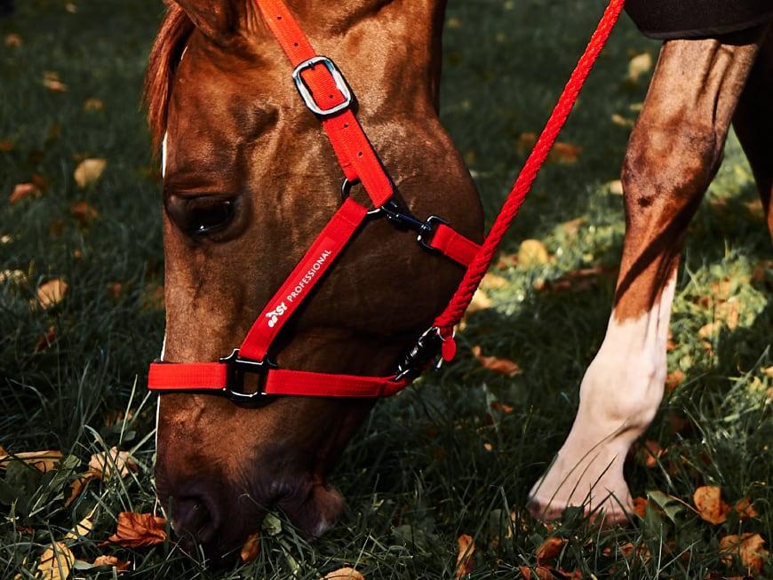 Tierärztin erklärt: Richtiges Angrasen vermeidet gefährliche Koliken!